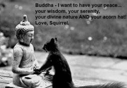 buddha_squirrel
